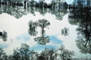 croissance économique bioidversité