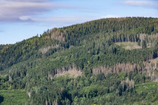 forêt vosgienne
