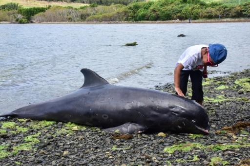 dauphin maurice