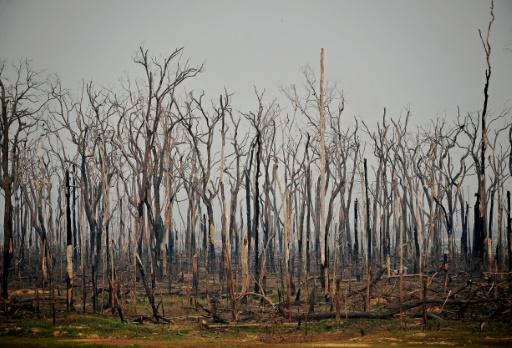 brésil feux de forêt