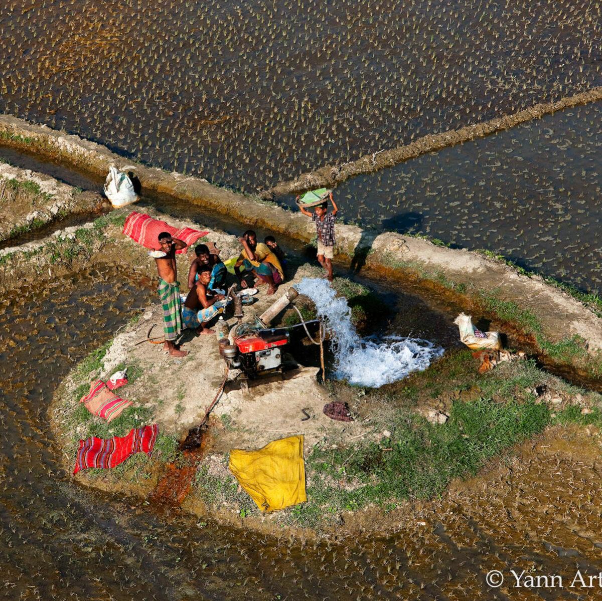 rizière Bangladesh