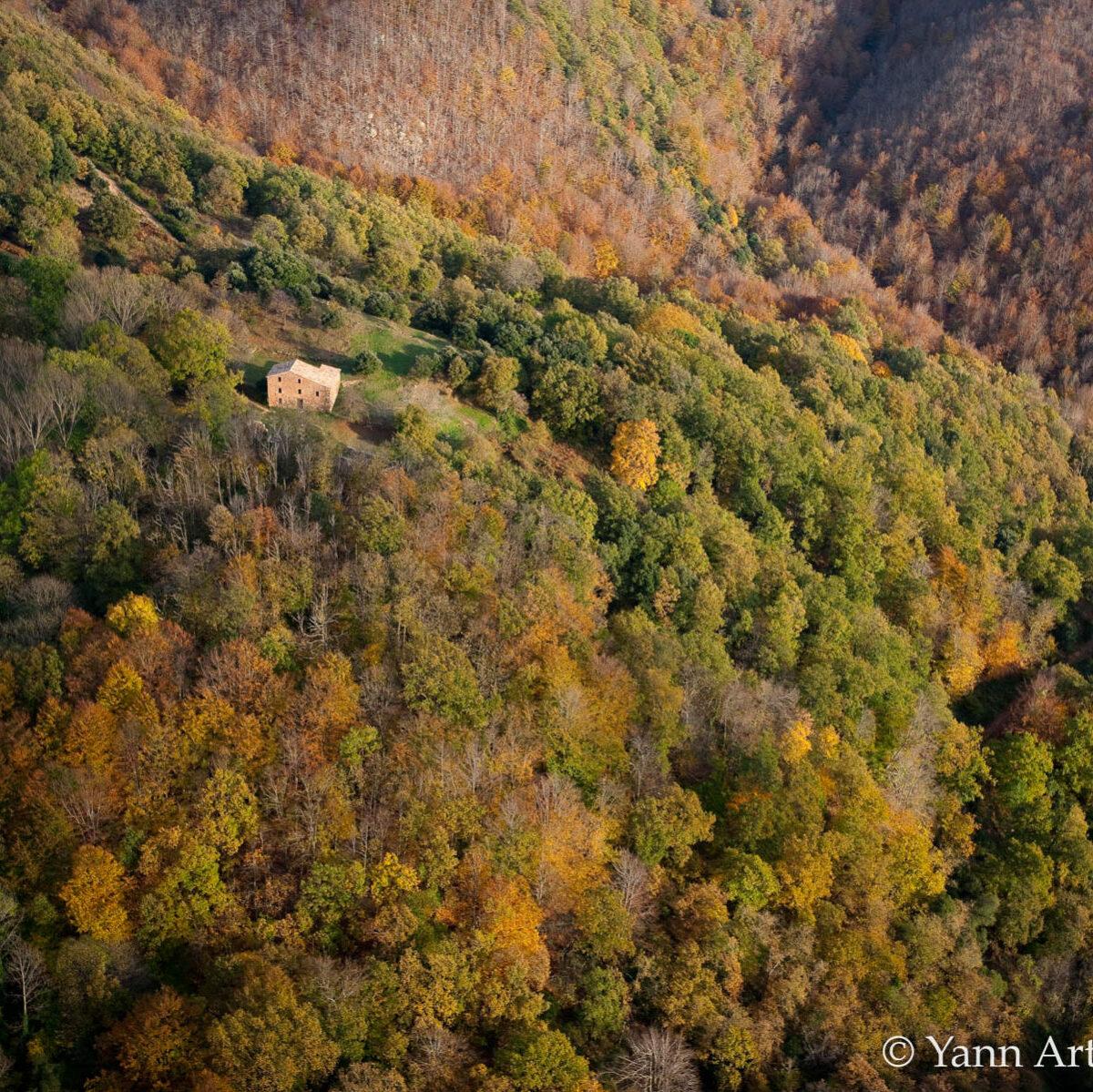reforestation naturelle forets spontanées