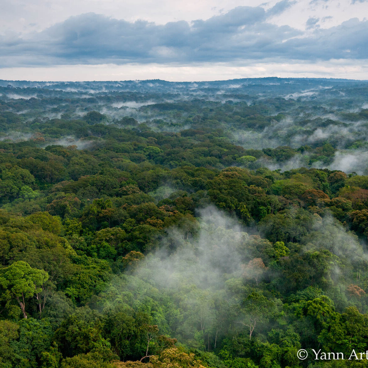 forêt tropical Gabon