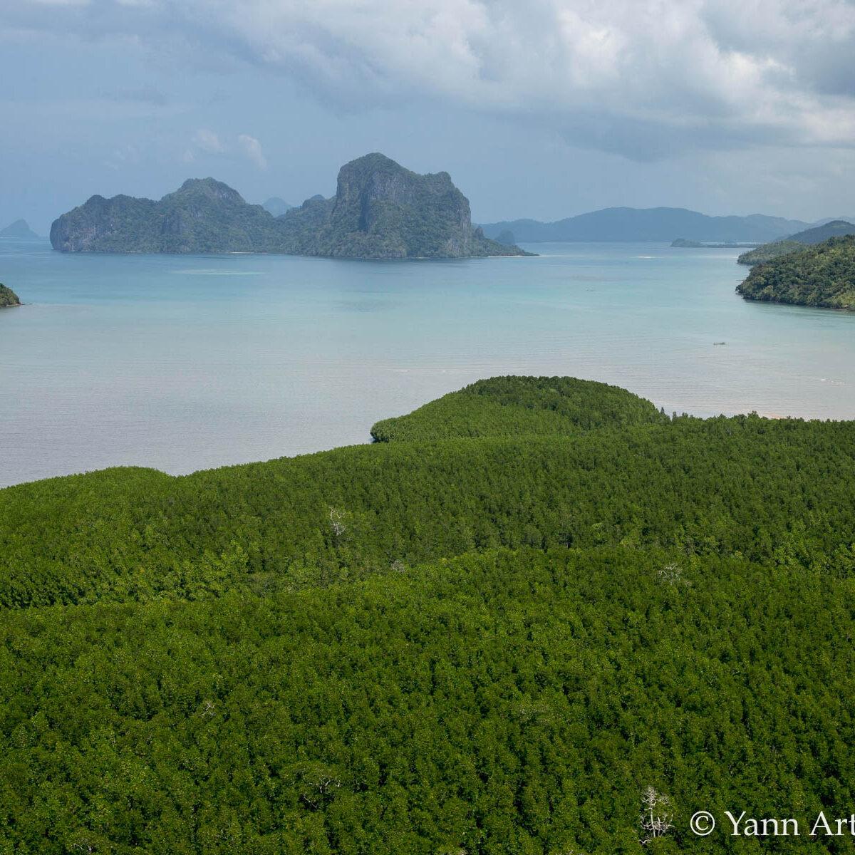 mangrove Philippines