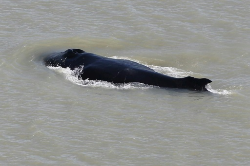 baleine à bosse Australie