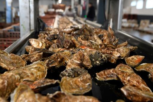 huîtres creuses nanoplastiques