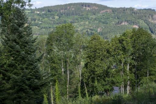 forêt France