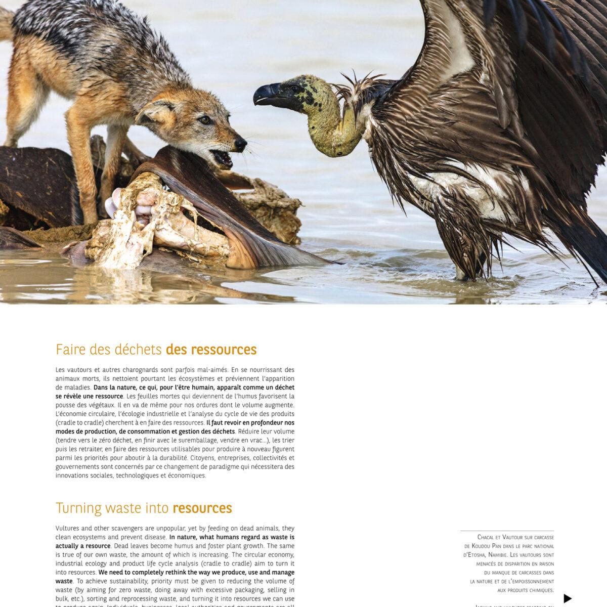 chacal vautour Namibie