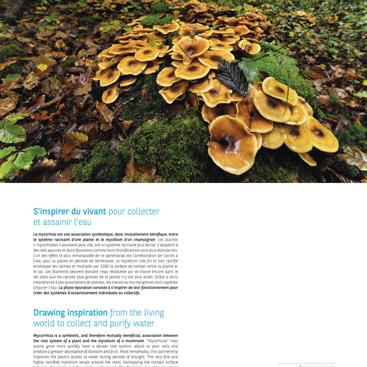 champignons France