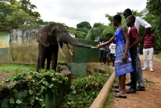 zoo Abidjan éléphant