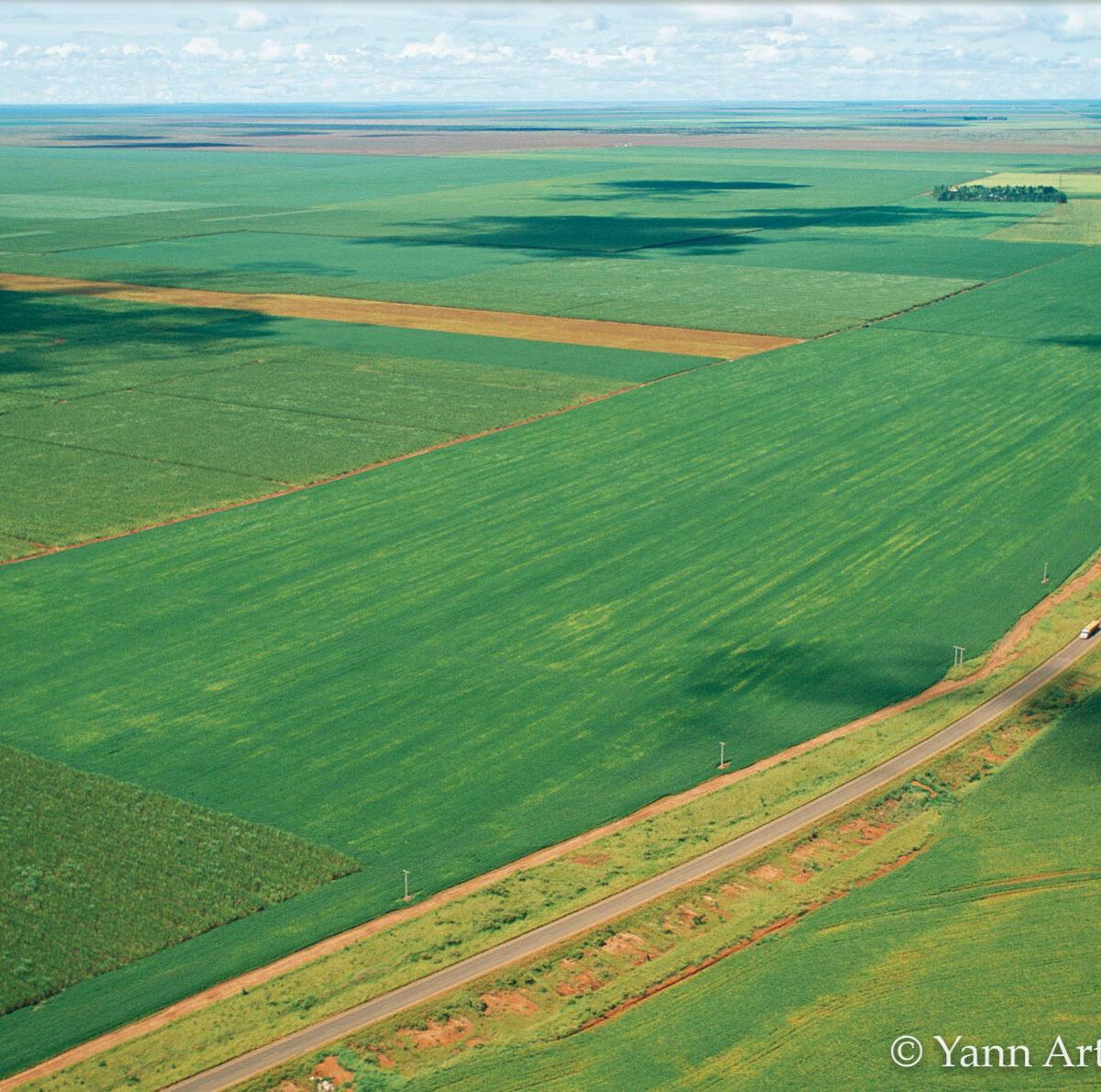 Brésil agriculture