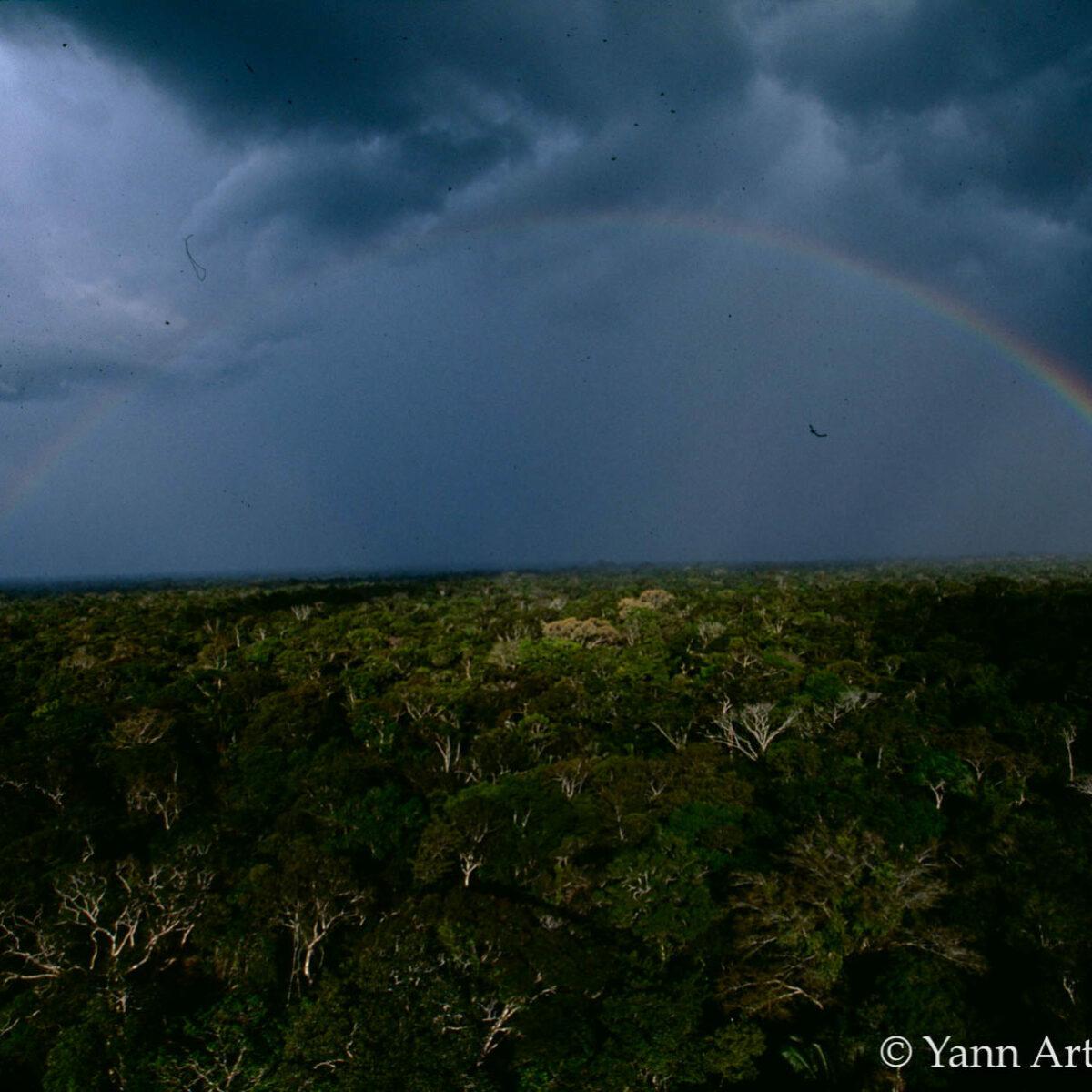 forêt amazonienne Brésil