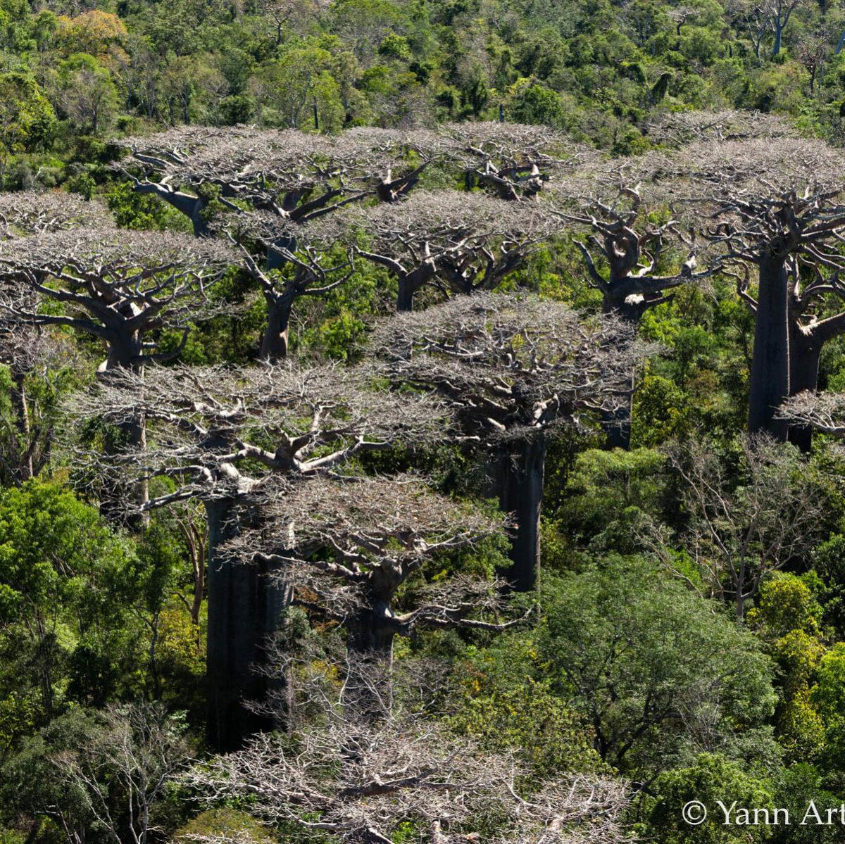 forêt baobabs Madagascar