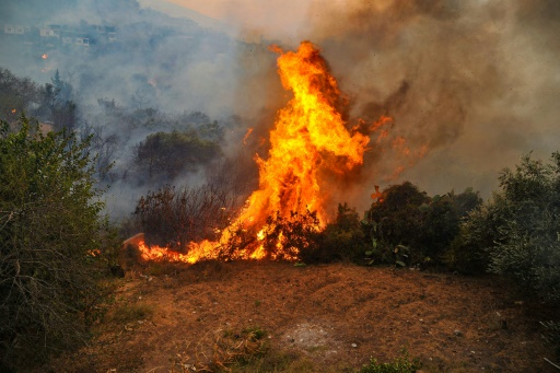 feu foret liban