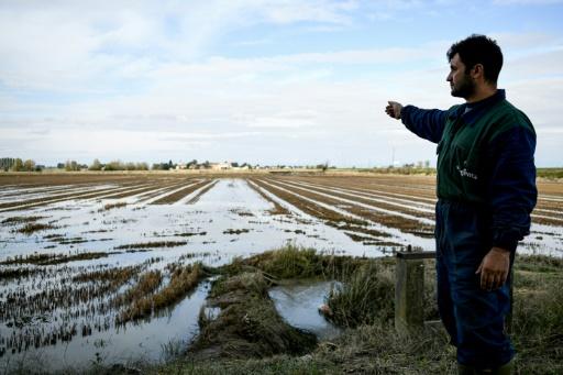 rizières Lombardie crues