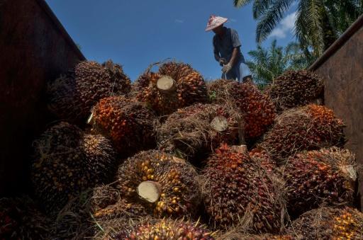 huile palme FGV Holdings