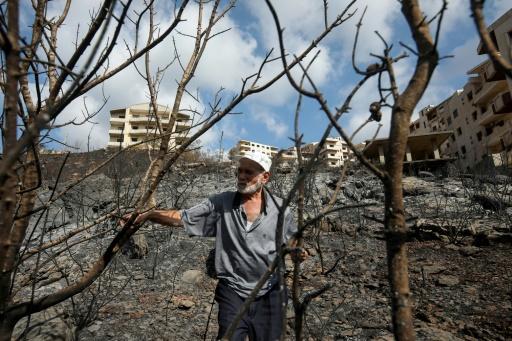 Syrie incendies olives