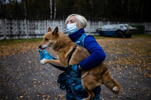 chien chacal detecteur covid