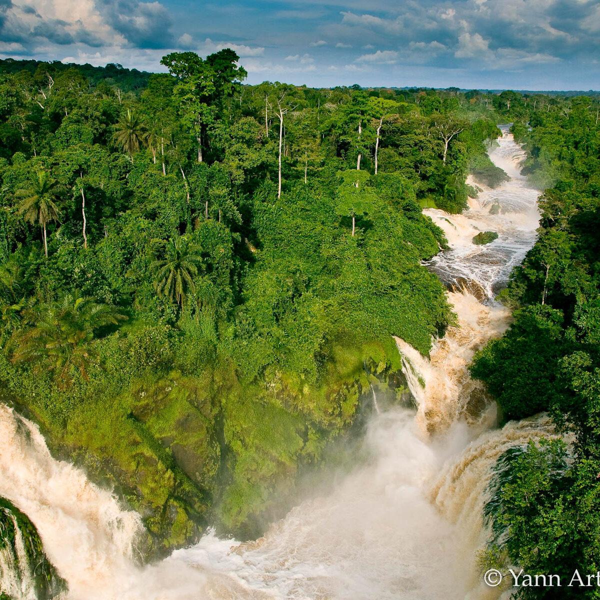 jungle Gabon forêt