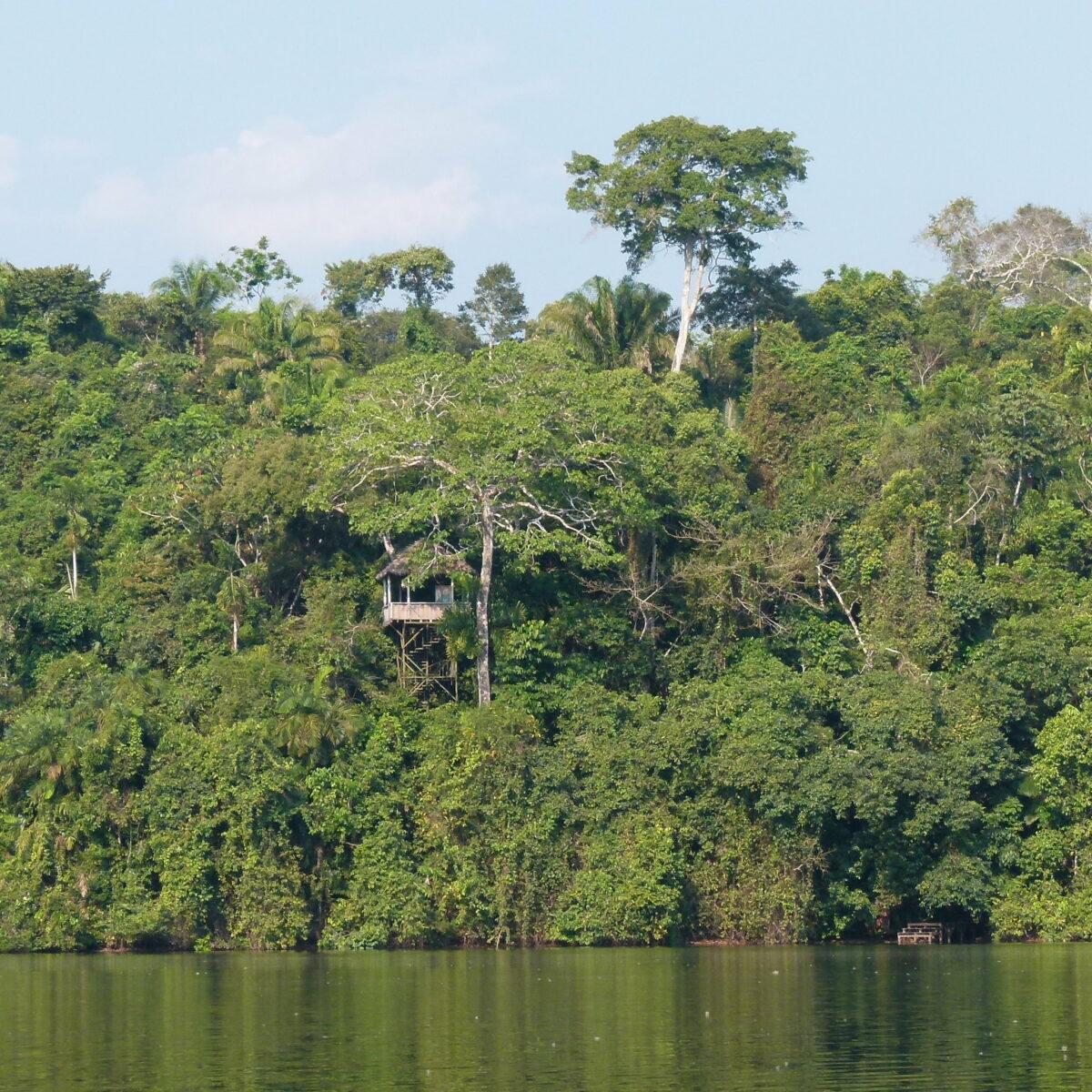 forêt tropicale envol vet