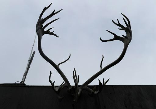 bois caribou Etats-Unis