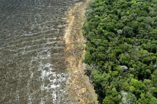 deforestation bresil amazonie
