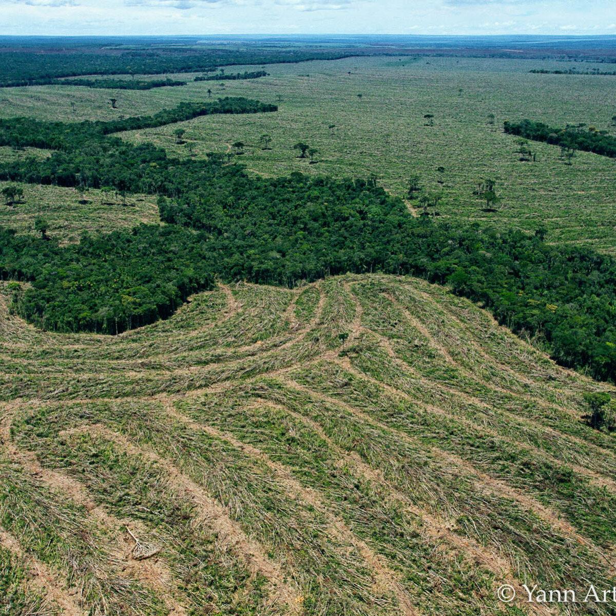 Amazonie déforestation Yann Arthus-Bertrand