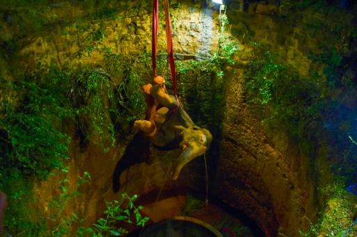 sauvetage éléphant Inde