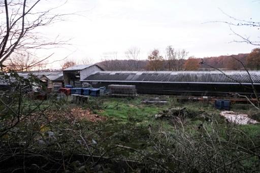 élevage visons France