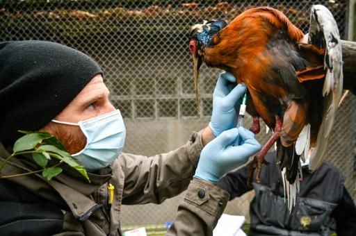 vaccin grippe aviaire zoo Mulhouse