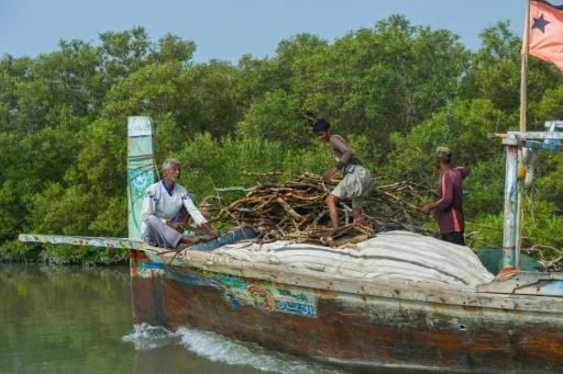 pêcheur mangrove pakistan