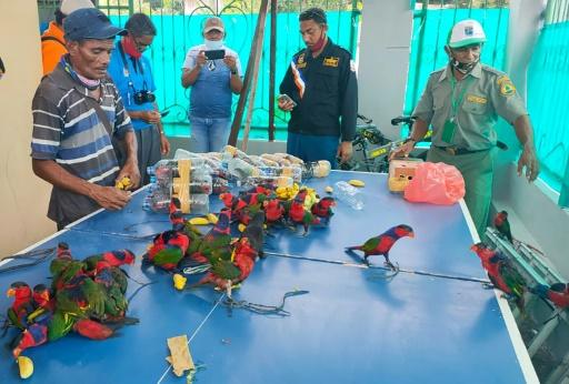 perruches trafic Indonésie