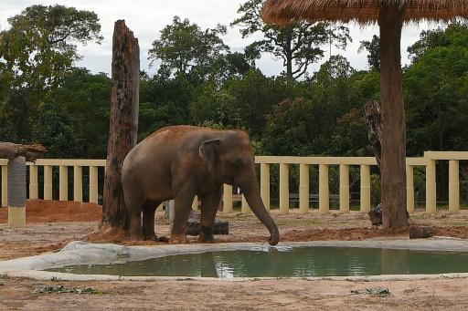 Kaavan éléphant Cambodge