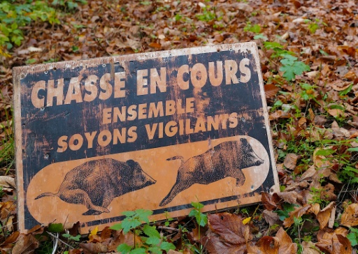 sangliers chasse battue France