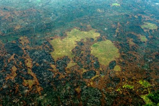 incendies forêt Amazonie Brésil