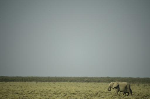 Namibie éléphant sécheresse