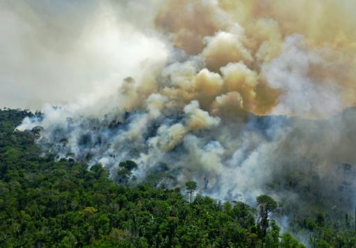 feu forêt Amazonie