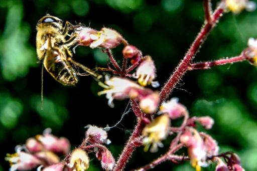 abeilles France