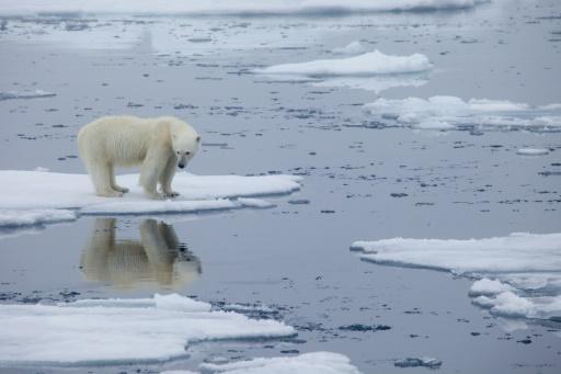 banquise ours polaire Norvège