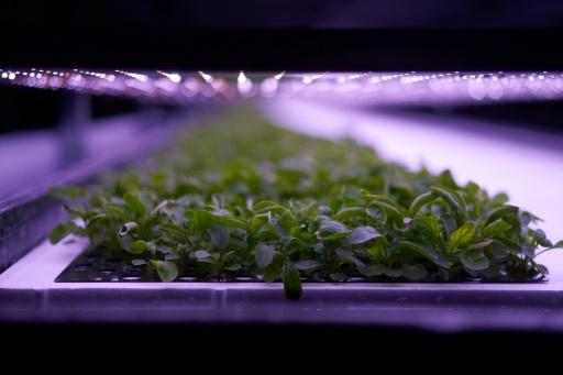 Danemark plants ferme verticale