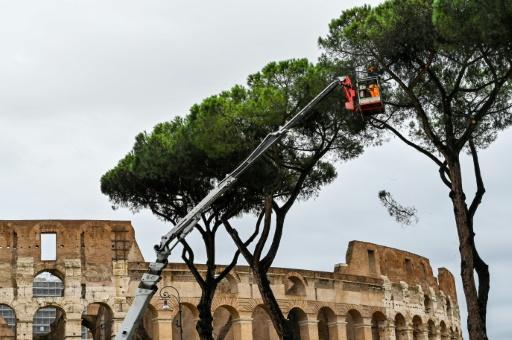 élagage pins Rome