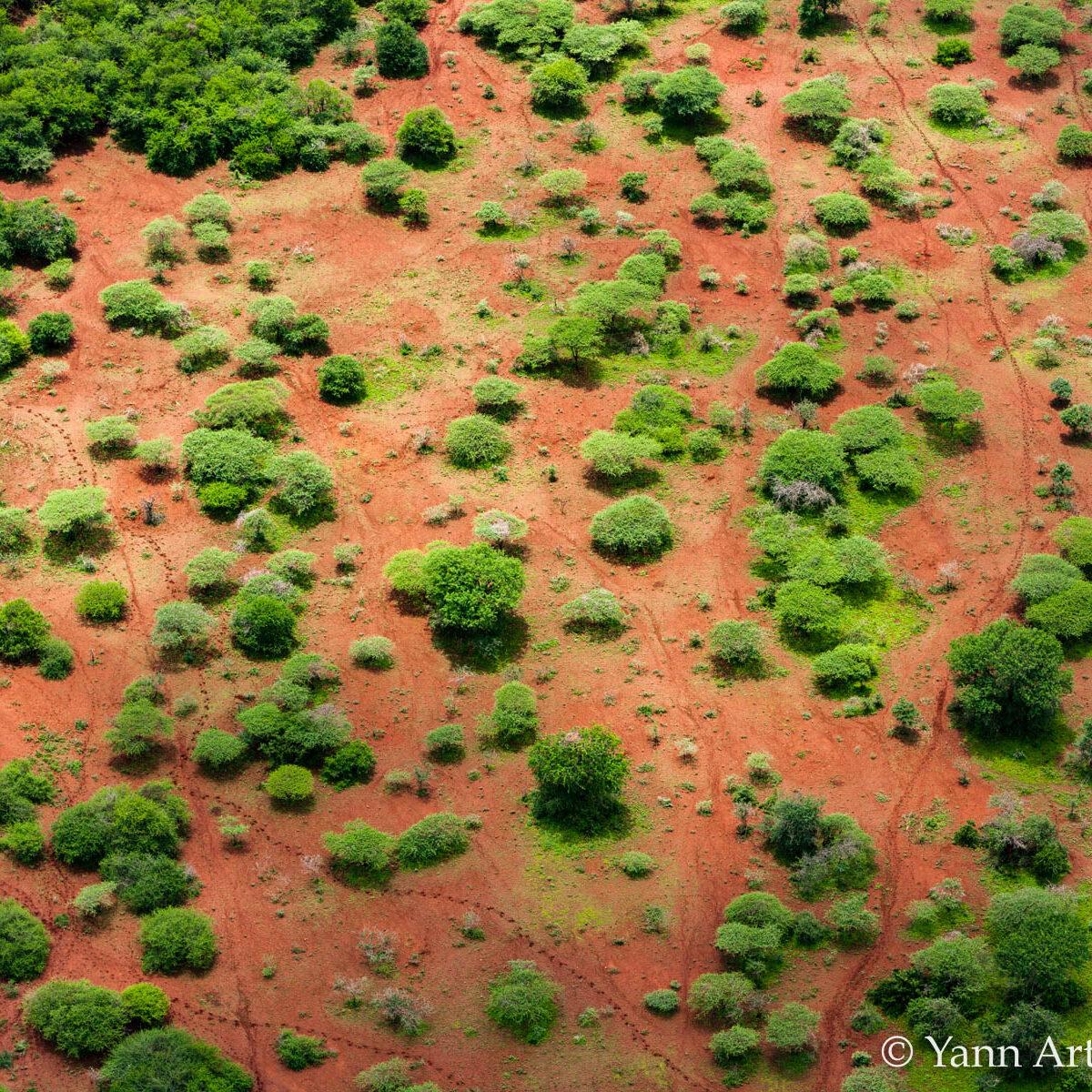 réserve chasse arbres Afrique Sud
