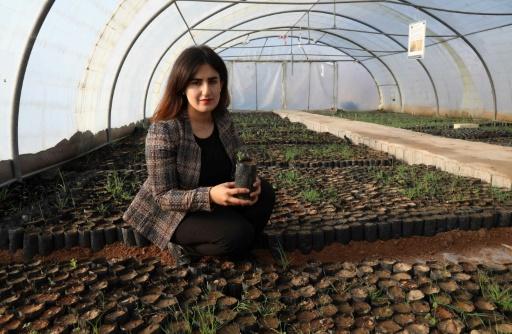 chênes plantation Irak