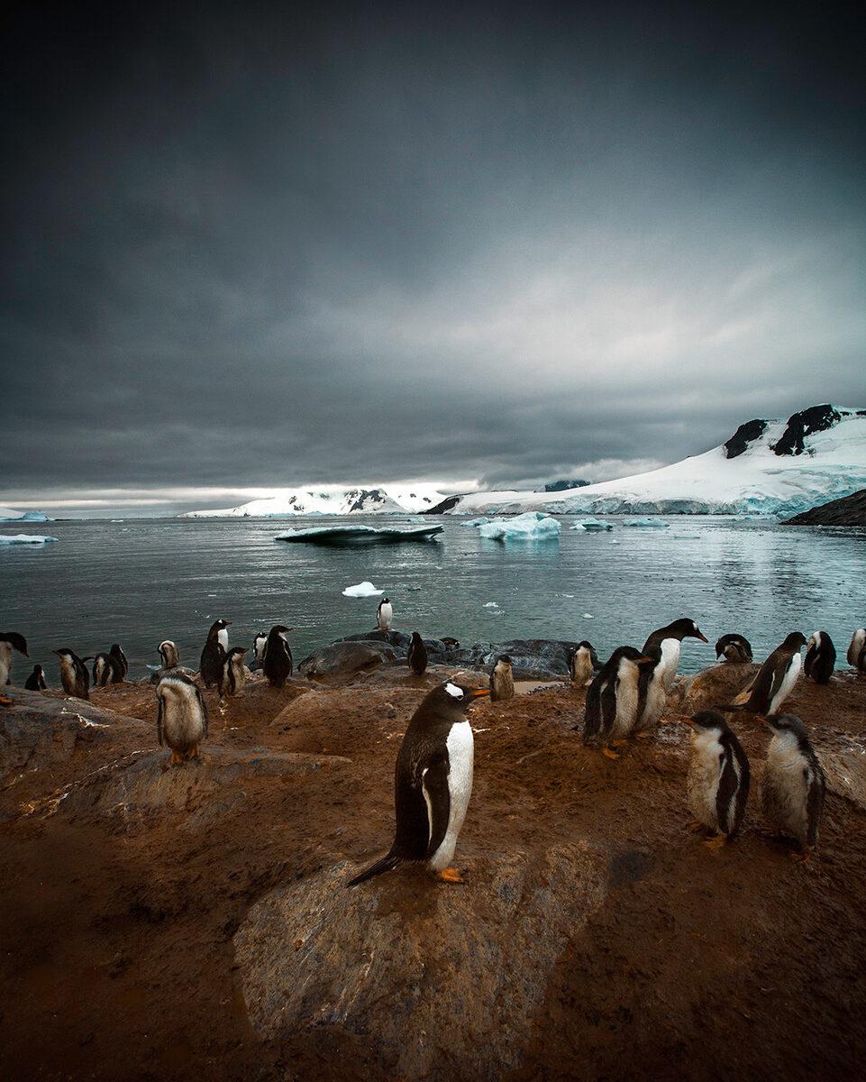 antarctoique covid-19