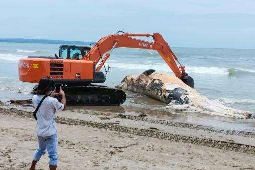 baleine échouée Bali