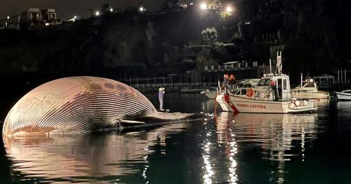 cadavre baleine Italie Naples