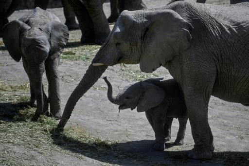 baby boom reserve naturelle