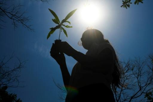 reforestation Salvador