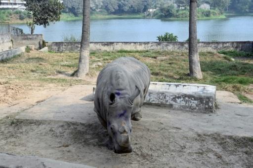 rhinocéros Bangladesh