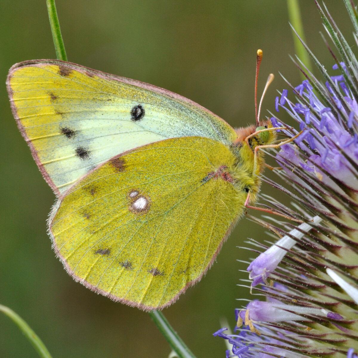 sauver nos insectes